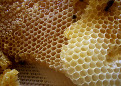 Bees Farmed in Tiverton